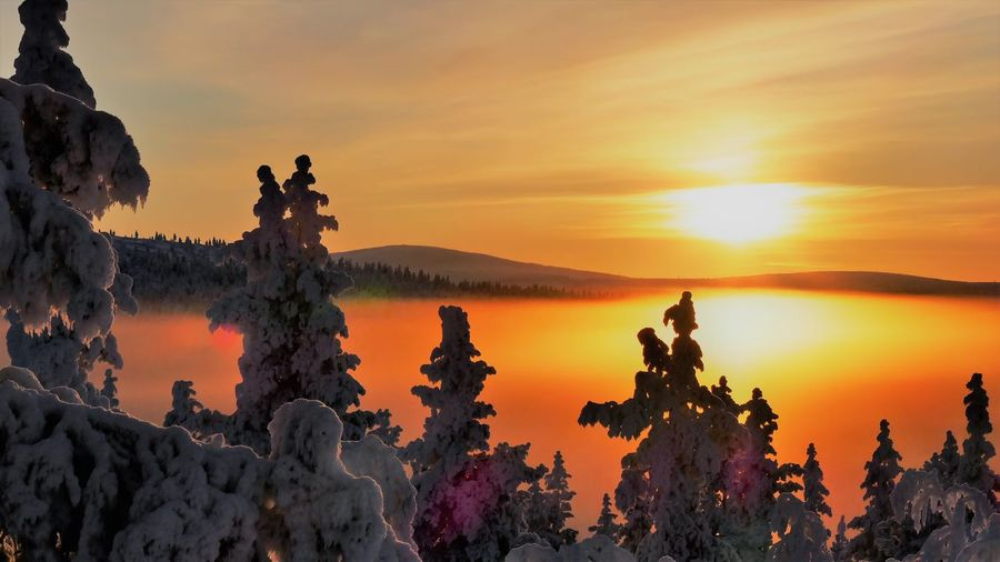 A rising morning Sunlight Rising Winter North Finland Snow ❄ Rising Day Tree Pinaceae Tranquility Outdoors Beauty In Nature Sky