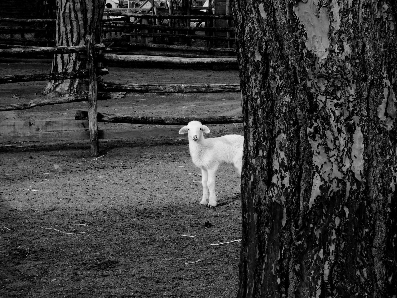 VIEW OF DOG STANDING ON GROUND