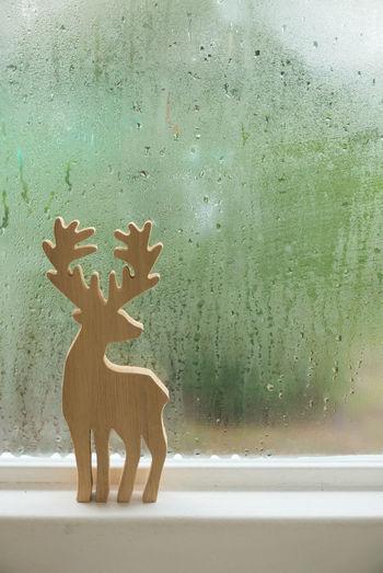 Close-up of deer on window