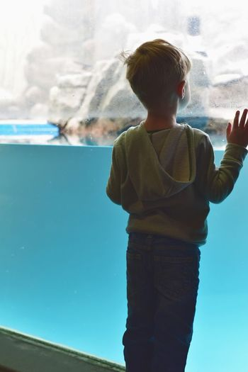 Rear view of boy looking in aquarium