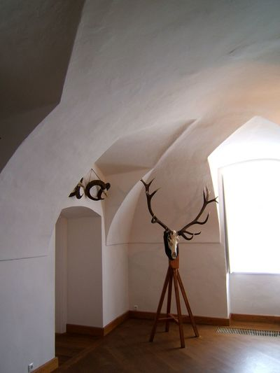 Taxidermy against wall at home