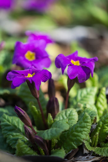 Spring Seasons Garden Flowers Freshness Growth Colors Plant Macro Close-up Environment Beauty In Nature Tranquility Scenics No People Nature Vulnerability  Fragility