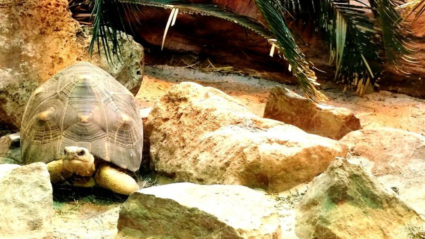 I just love the sassyness of the turtles! ? Turtle Desert Zoo London