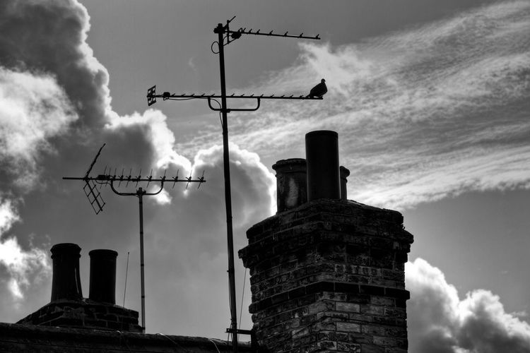 Sky channels Antennas Pigeon Sky Clouds And Sky Blackandwhite Blackandwhite Photography Black And White United Kingdom Monochrome Photography MonochromePhotography London Lifestyle