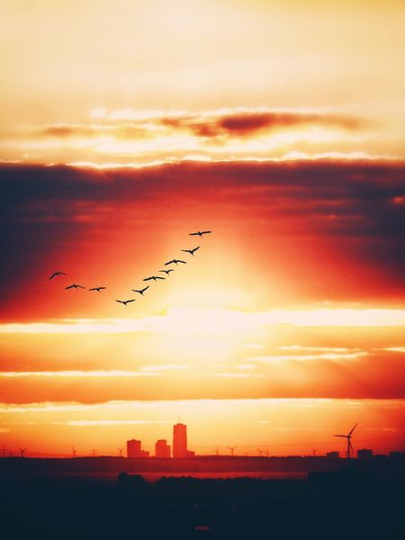 Freedom of Flight. P360 Flying Bird Orange Color Silhouette Sky Beauty In Nature Animal Themes Tranquility Scenics Cloud - Sky Cloud Tranquil Scene Calm Romantic Sky Nature Outdoors Outline Dark Atmosphere Sunrise Onephotoaday 365project2016 Horizon Over Land Windmills