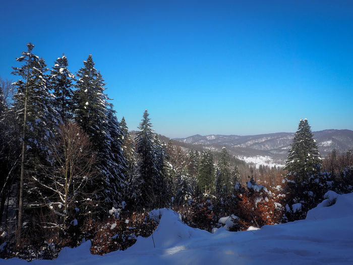 Bieszczady Mountains Beauty In Nature Bieszczady Blue Clear Sky Cold Temperature Coniferous Tree Covering Day Environment Land Mountain Nature No People Non-urban Scene Outdoors Pine Tree Plant Scenics - Nature Sky Snow Snowcapped Mountain Tranquil Scene Tranquility Tree Winter