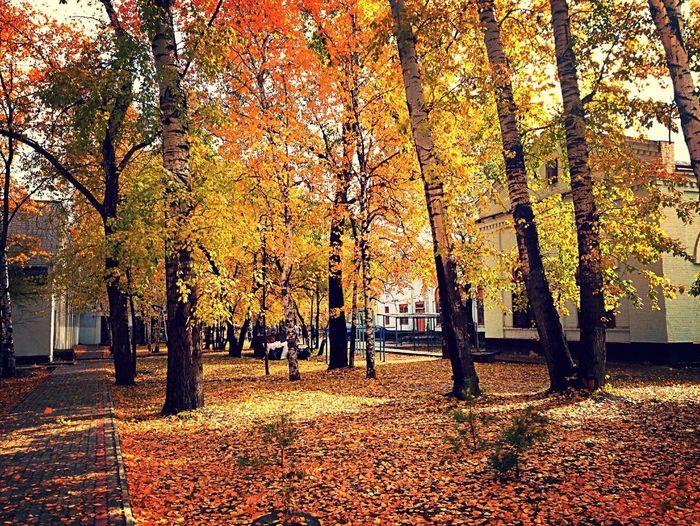 Autumn листья Orange Followme