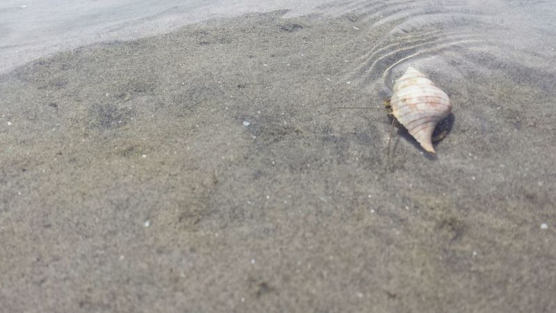 One Animal Sand Animal Themes High Angle View Nature Animals In The Wild Outdoors No People Water Beauty In Nature Beach Sea Life Landscape Underwater Shell Crab Hermit Hermit Crab