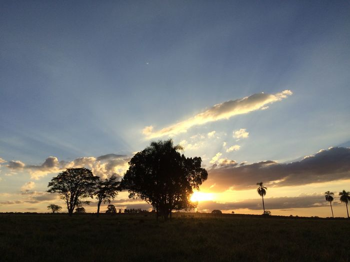 Trees Growing On Grassy Field Against Sky During Sunset