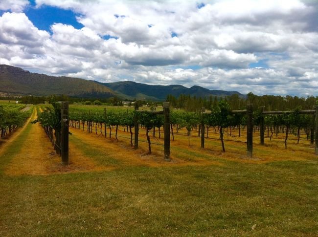 Landscape Sky Field Tranquil Scene Tranquility Growth Scenics Fence Beauty In Nature Nature Agriculture Farm Cloud - Sky Cloud In A Row Vineyard Mountain Cloudy Australia Outdoors Winegarden