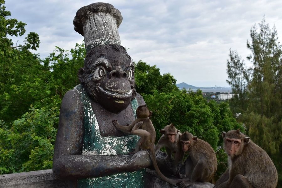 My Favorite Place Monkeys
