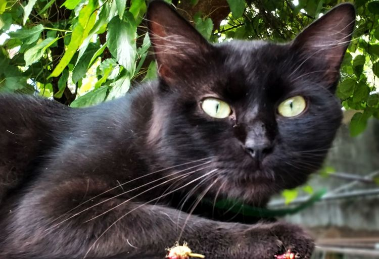 Domestic Cat Domestic Animals Animal Themes Pets One Animal Looking At Camera Feline Mammal Black Color Yellow Eyes Portrait Whisker No People Plant Cat Close-up Animal Eye Outdoors Brazil Sao Paulo - Brazil