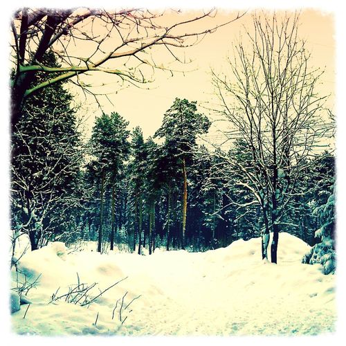 красота зима Лес холодно