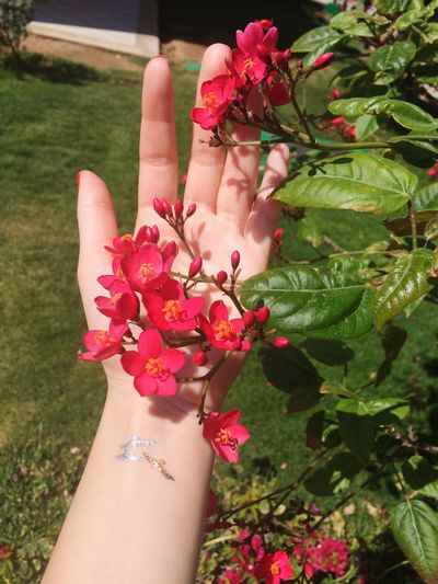 Hand Flowers Red Flowers Flowerporn Flash Tattos Gold Tattoos Silver Tatto Temporary Tattoo Beauty Summer On My Hand In My Hand Holding Nature Nature's Diversities The Essence Of Summer Human Hand Human And Nature Tattoo