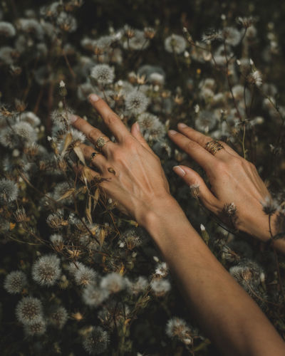 Close-up of hand touching dandelions