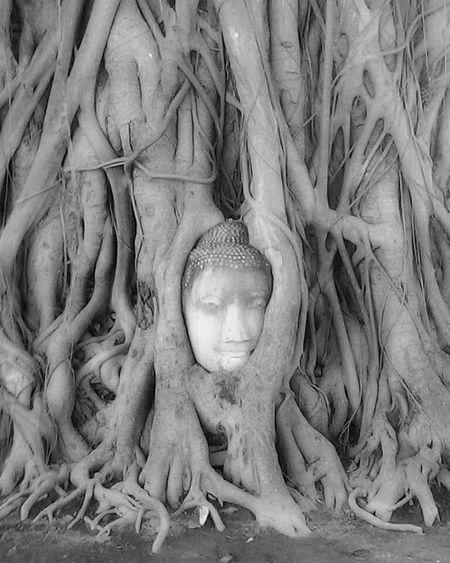 Sukothai Thailand ASIA Travelling Blackandwhite Monochrome Backpacker Buddha Spirituality Tree