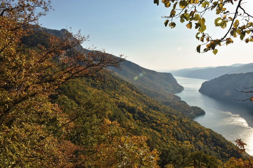 Danube gorge, Serbia Mountain Beauty In Nature Tree Plant Scenics - Nature Tranquility Tranquil Scene Sky Water Nature Autumn Non-urban Scene No People Day Mountain Range Growth Branch Idyllic Outdoors Autumn Autumn colors River