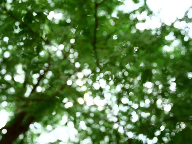 Green Color Nature Tree Backgrounds Beauty In Nature Environment Abstract Defocused No People Outdoors Freshness Day Forest Bokeh