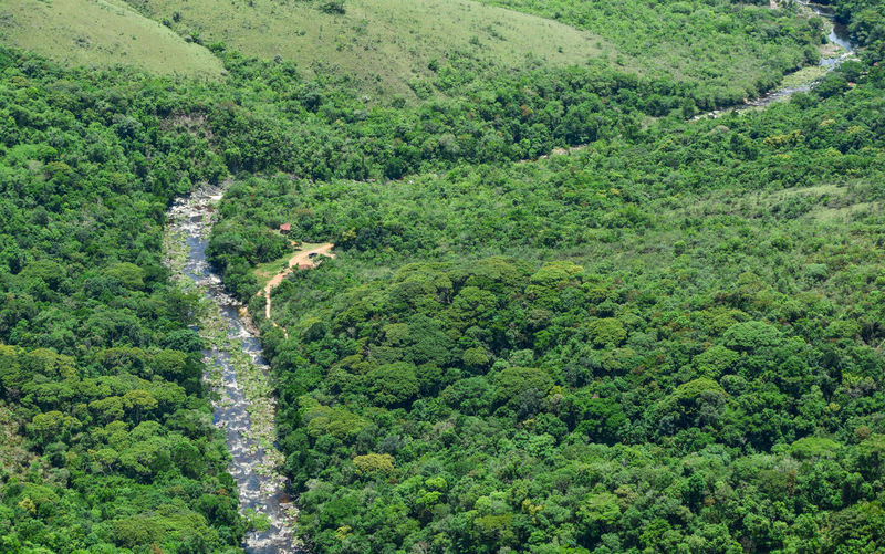 High angle view of land amidst trees in forest
