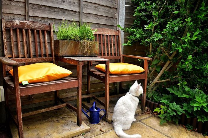 Pets Domestic Animals Front Or Back Yard Animal Themes Plant Chair Outdoors One Animal No People Day Architecture Small Garden Shabby Chic Charming Place Old Chair Colours Accent