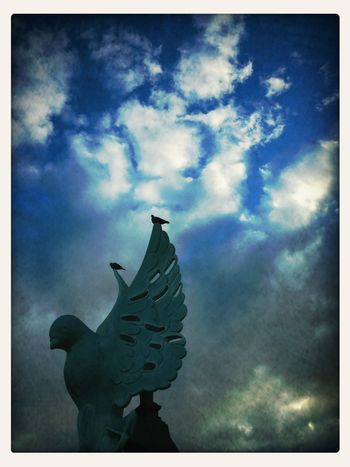 Wings Of A Dove.
