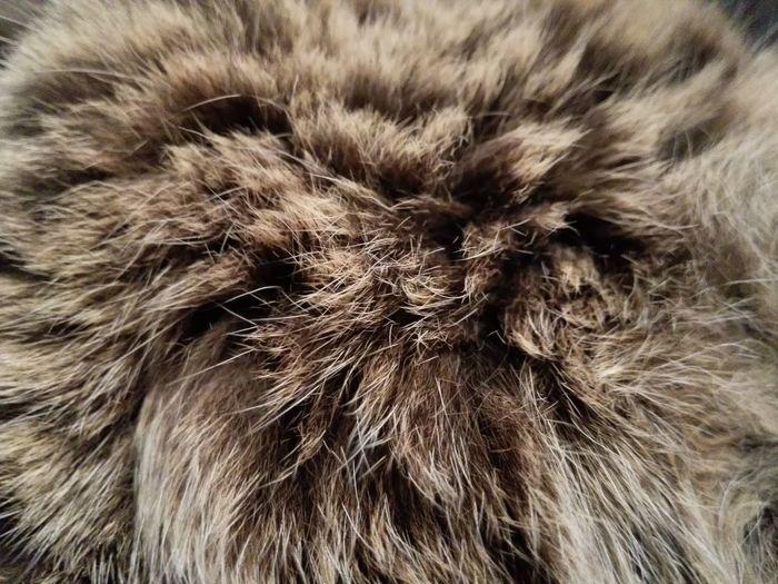 Cat; Fur Fresh On Eyeem  Animal Themes Animal Head  Animal_collection HuaweiP9 3XSPUnity Cat Fur Animals Skin