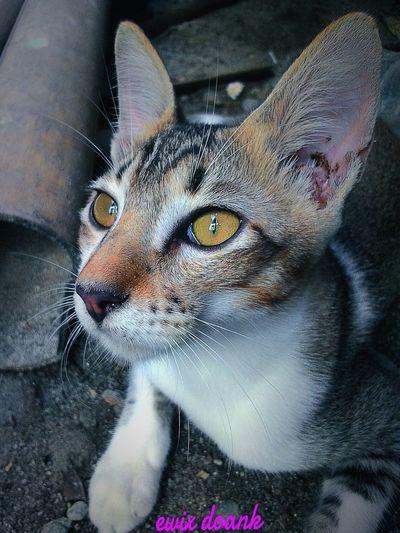Nature Animalphotography Animals Pets Cat ,lazy Cat