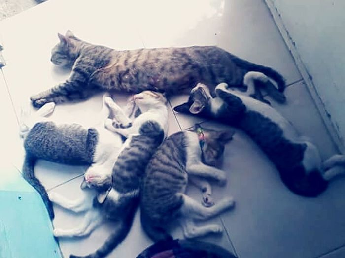 This is actually their family picture... Cats Catlovers Feline Domestic Animals Domestic Cat Five Cats Sleeping Cats No People