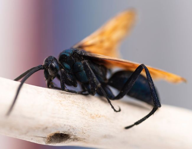Insects  Invertebrate Insect Animal Wildlife Animals In The Wild Close-up Animal Themes Animal One Animal No People Indoors  Animal Body Part Selective Focus Zoology Fly Nature