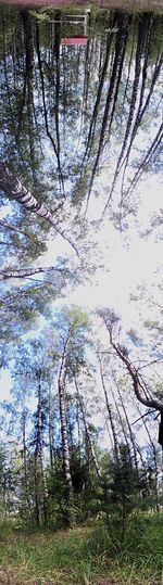 Summer Forest Sky_collection IPhoneography