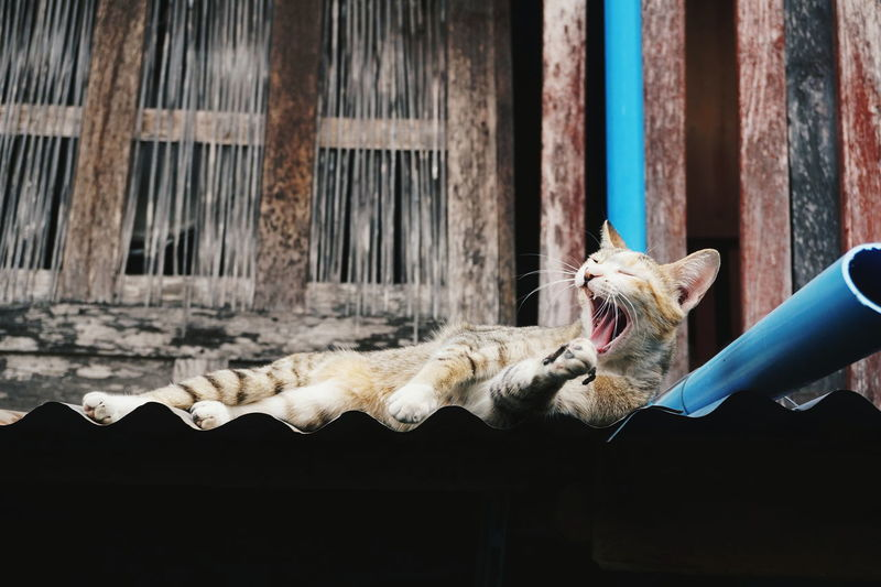 Low angle view of cat yawning while lying on roof