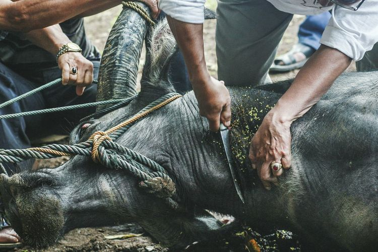 Midsection of people cutting buffalo outdoors