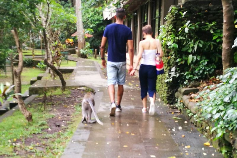 This pic take it holiday in Bali Two People Lifestyles Walking With Monkey