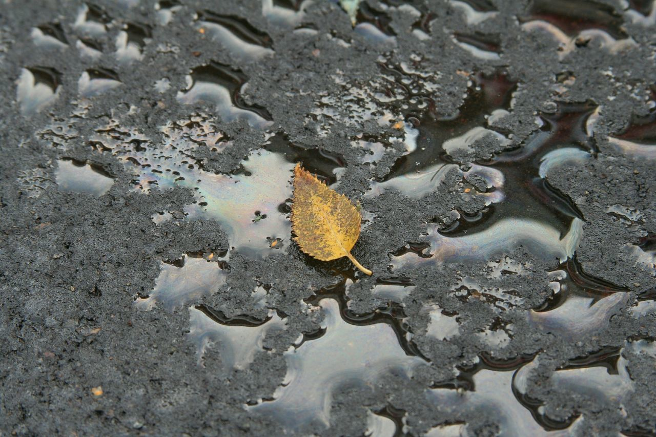 High angle view of leaf on puddle