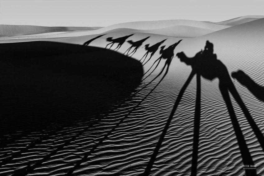 Moroccan Camel Train across the Sahara