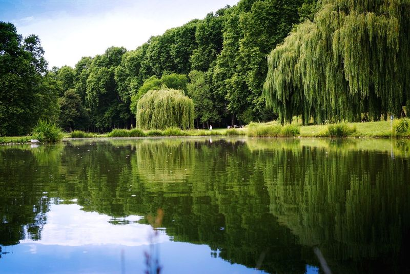 City jungle Lake Water Nature Reflection Beauty In Nature