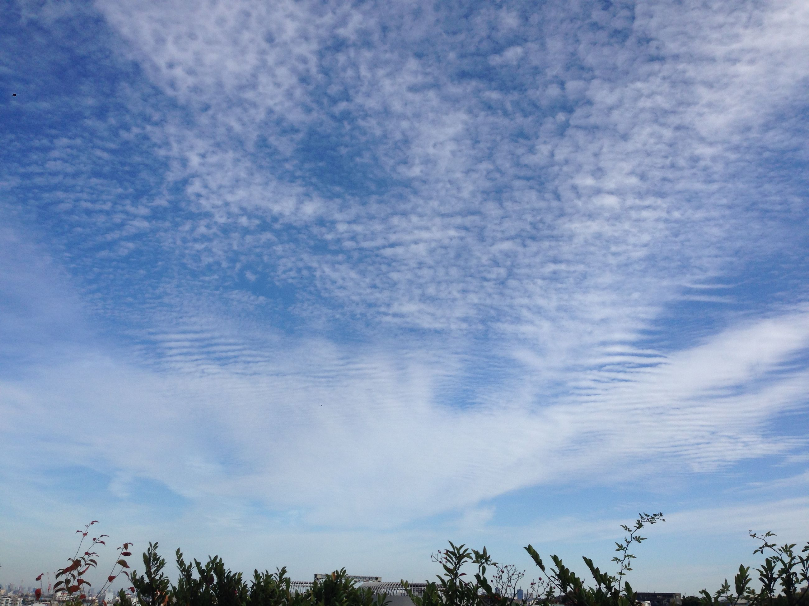 sky, tranquility, cloud - sky, beauty in nature, scenics, tranquil scene, weather, nature, cloudy, idyllic, low angle view, backgrounds, cloud, cloudscape, outdoors, season, winter, full frame, day, no people
