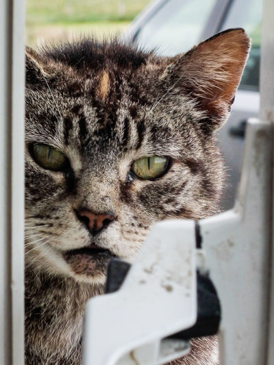 Animal Head  Animal Themes Cat Cat At Window Close-up Day Domestic Animals Domestic Cat Focus On Foreground Mammal One Animal Pets Whisker Whiskers Window