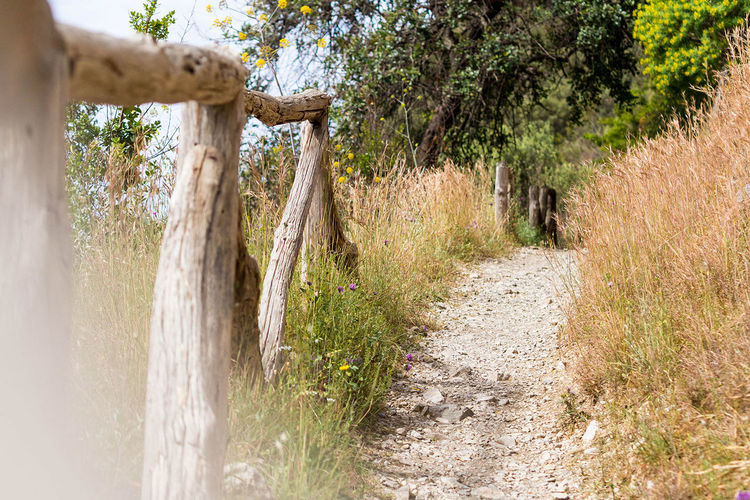 Small hiking path in the hills around Sorrent at the beautiful amalfi coast Beauty In Nature Escape, No People, Summer, Footpath Landscape Moody Nature Outdoors Walking, Trekking, Hiking, Outdoor Sports, Trail