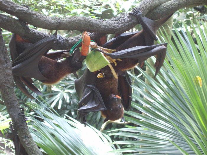Animals Bat