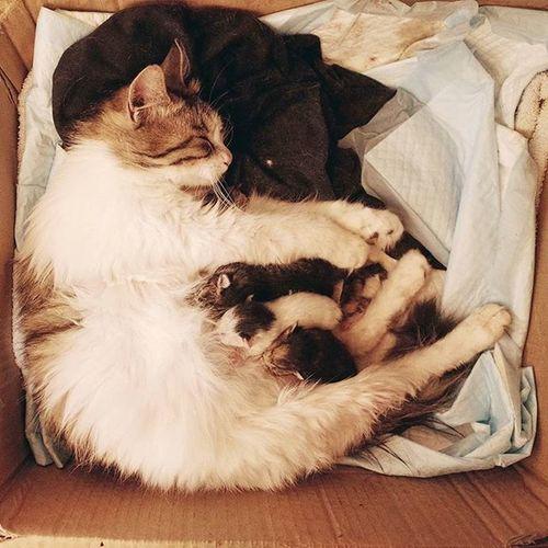 做媽媽啦... Cat