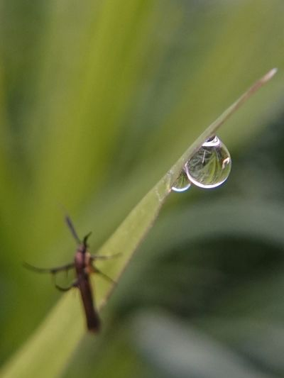 Up Close Dewdrop Dews Dew Morningdew Dewdrops MorningDewdrops Morningdews Dew Drops Drop Water Beauty In Nature Close-up Nature Insect Leaf