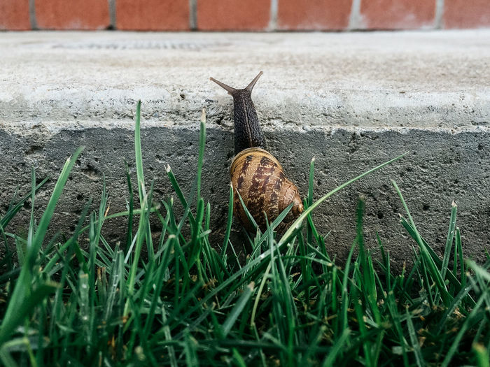 Close-Up Of Snail By Grass