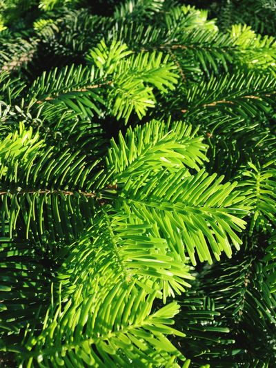 Green Leaf Nature Day Green Color Beauty In Nature Fern Growth Foliage No People Close-up Outdoors