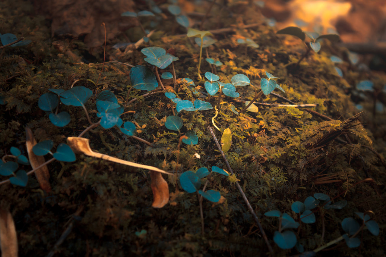 leaf, nature, no people, outdoors, close-up, autumn, fragility, day, beauty in nature, fungus, toadstool, freshness