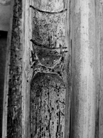 Close-up of old tree trunk