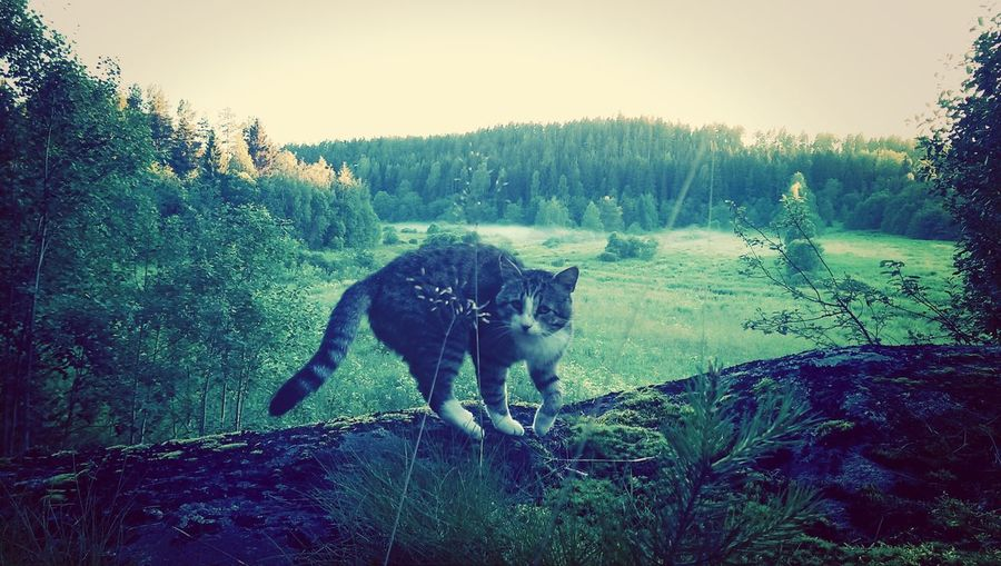 Cat Karelia nature