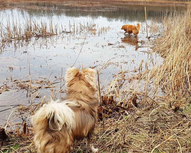at the lake Dogs Of EyeEm Outdoor Having Fun Chiwawa Nova Scotia Duck Tolling Retriever Water Lake Landscape Wanderlust Nature Exploring Freedom Water