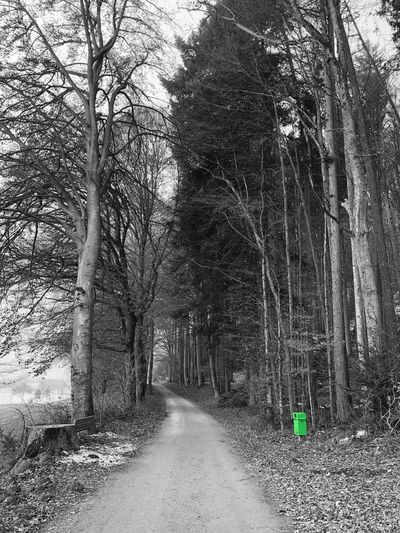 Inner beauty is green... Green Color Blackandwhite Photography Tree Bare Tree The Way Forward Road Day Branch Tranquility No People Outdoors Tree Trunk Sky Forest Nature