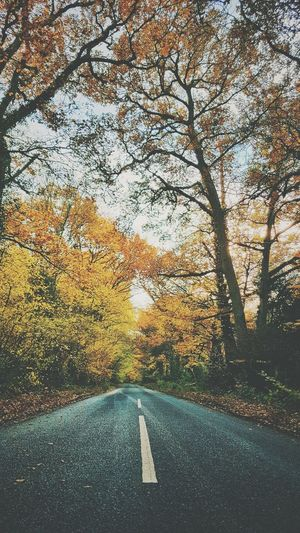 Autumn hues Autumn Autumn colors Trees Landscape Sky Empty Road Countryside Country Road Leaves vanishing point Treelined